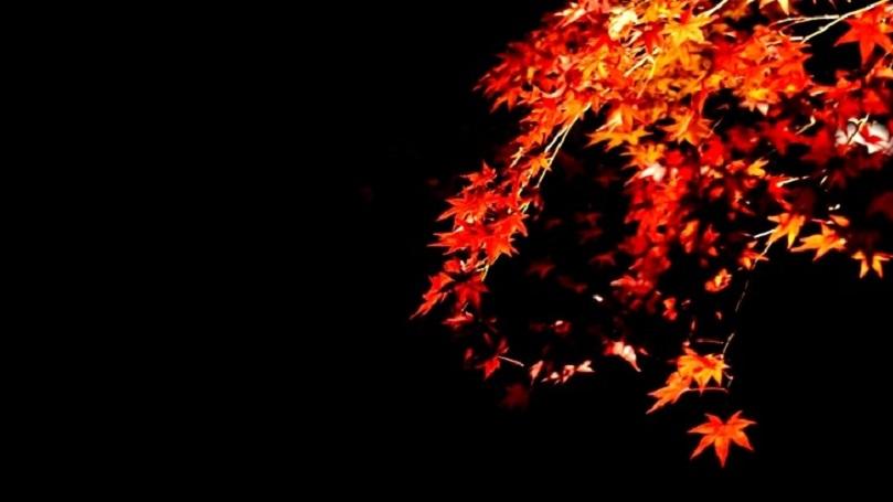 夜に秋めく
