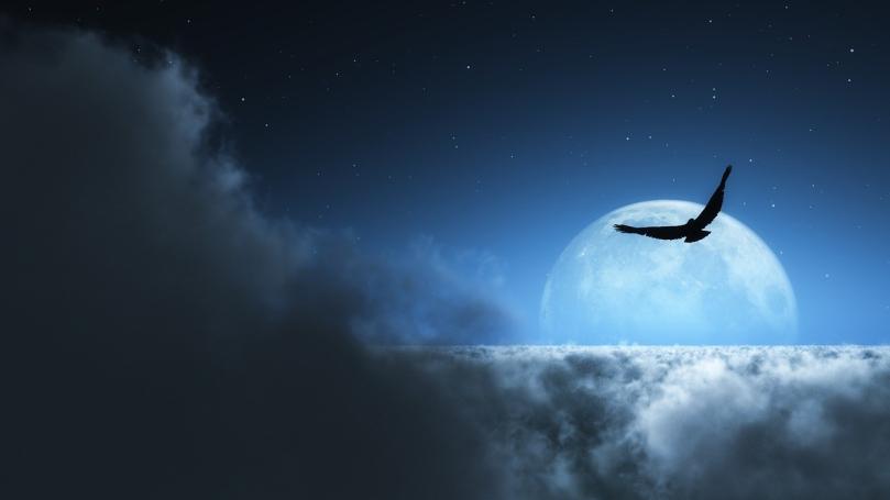 月の妖鳥のイメージ